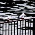 Bird0003