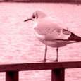 Bird0006