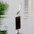 Bird0009